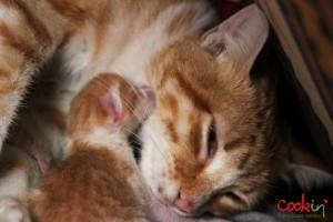 Meghle Levantine Spice Pudding Recipe & The Newborn Kittens - Cookin5m2-5
