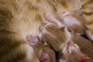 Meghle Levantine Spice Pudding Recipe & The Newborn Kittens - Cookin5m2-6