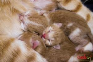 Meghle Levantine Spice Pudding Recipe & The Newborn Kittens - Cookin5m2-7