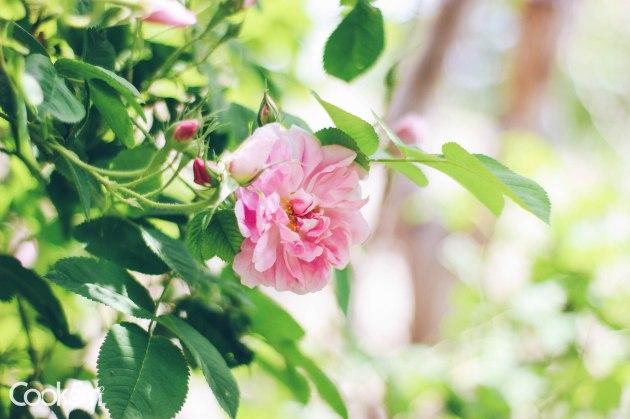 Blooming April Week 3 - cookin5m2 -0281