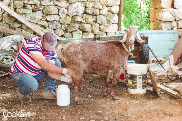 Fresh White Baladi Goat Cheese recipe - cookin5m2 -1301